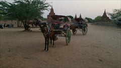 Bagan Hourse carrage Myanmar photo