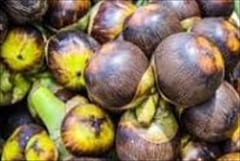 Dawei Wine Palm Fruit